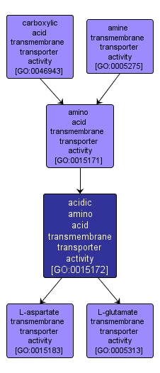 GO:0015172 - acidic amino acid transmembrane transporter activity (interactive image map)