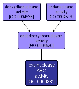 GO:0009381 - excinuclease ABC activity (interactive image map)