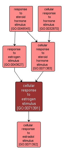 GO:0071391 - cellular response to estrogen stimulus (interactive image map)
