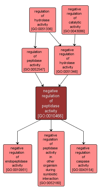 GO:0010466 - negative regulation of peptidase activity (interactive image map)