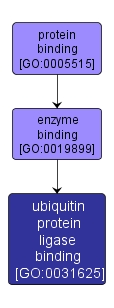 GO:0031625 - ubiquitin protein ligase binding (interactive image map)