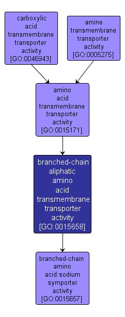 GO:0015658 - branched-chain aliphatic amino acid transmembrane transporter activity (interactive image map)