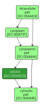 GO:0005829 - cytosol (interactive image map)