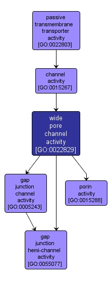 GO:0022829 - wide pore channel activity (interactive image map)