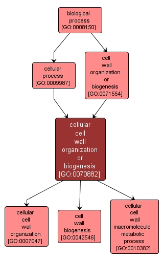 GO:0070882 - cellular cell wall organization or biogenesis (interactive image map)